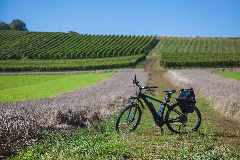 Mosa-ebike-tours-bikes-netherlands-nederland-Belgium-Belgie-Jeker-Vallei-wijngaard-fiets